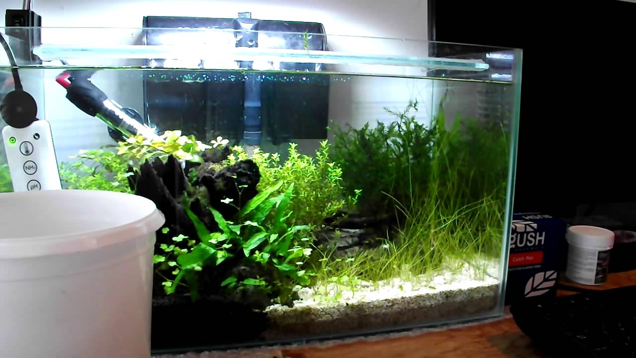 Small Planted Aquarium Rescape Using AquariumPlantFood.co.uk ...
