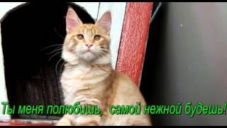 Лирикум Дольче  Кабанов, котенок мейн-кун ровно 5 мес., питомник Лирикум