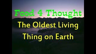The Oldest Living Thing on Earth - a true story