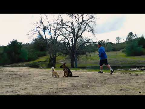 Off Leash Puppy Training - Reggie the Schipperke & Minnie the German Sheperd