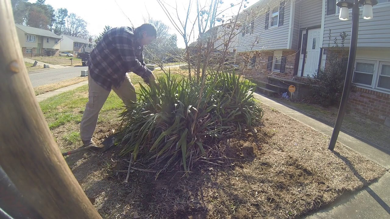 Removing Large Weeds Bushes Small Trees