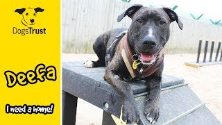 Deefa the Cuddly Crossbreed is Looking For a Home! | Dogs Trust Leeds