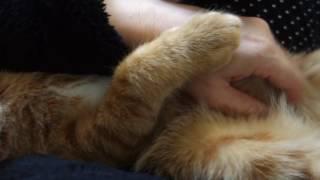 怖がりの子猫、りうくん。その14★りうくんを抱っこ★