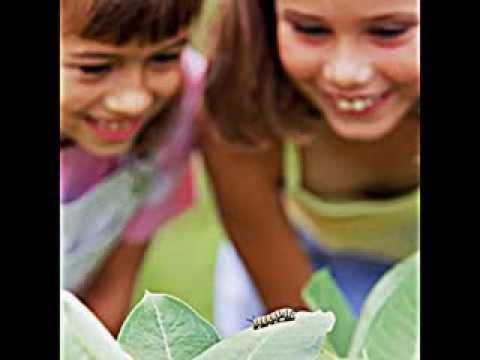Schmetterlinge im Garten anlocken - YouTube