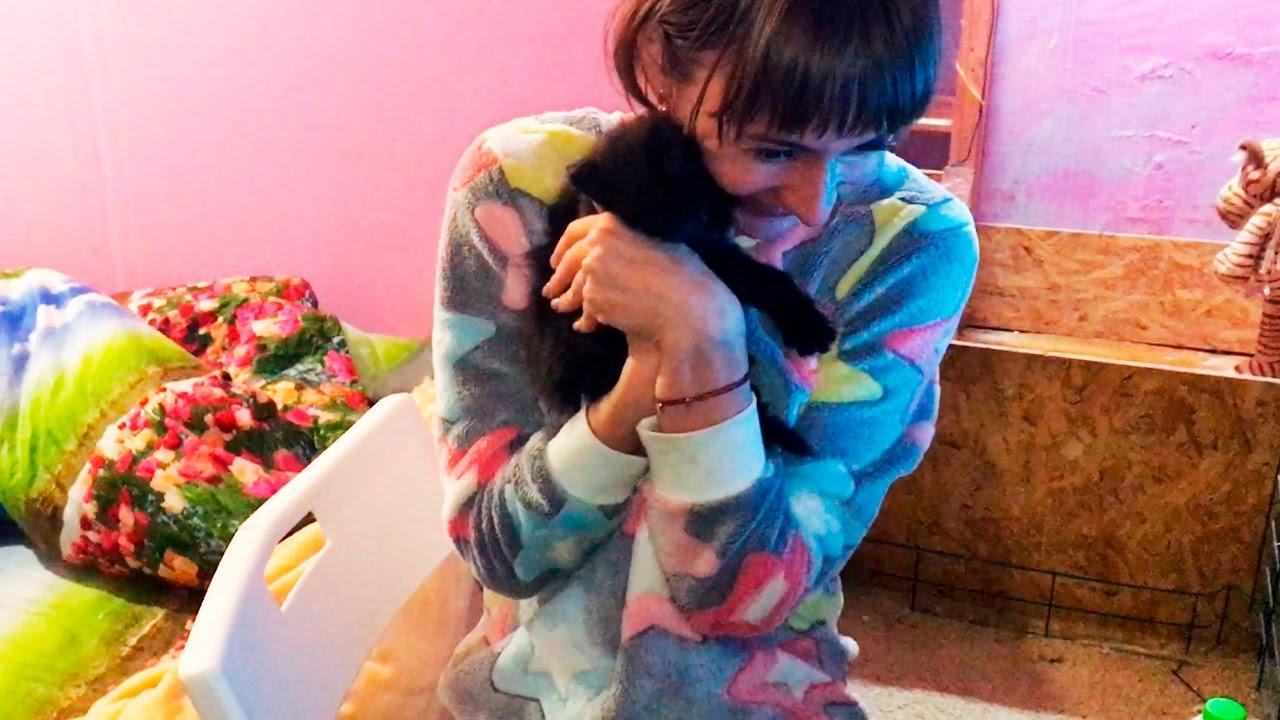 Жена без ПРЕДУПРЕЖДЕНИЯ принесла в дом нового котенка домашней рыси