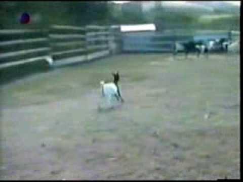 Постель, обморочные козы гифка