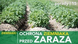 Jak chronić uprawę ziemniaka przed zarazą?