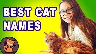 12 Ways to Pick the Perfect Cat Name - Best cat name list