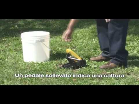 Trappola x mosche risultati e doovi for Talpe in giardino