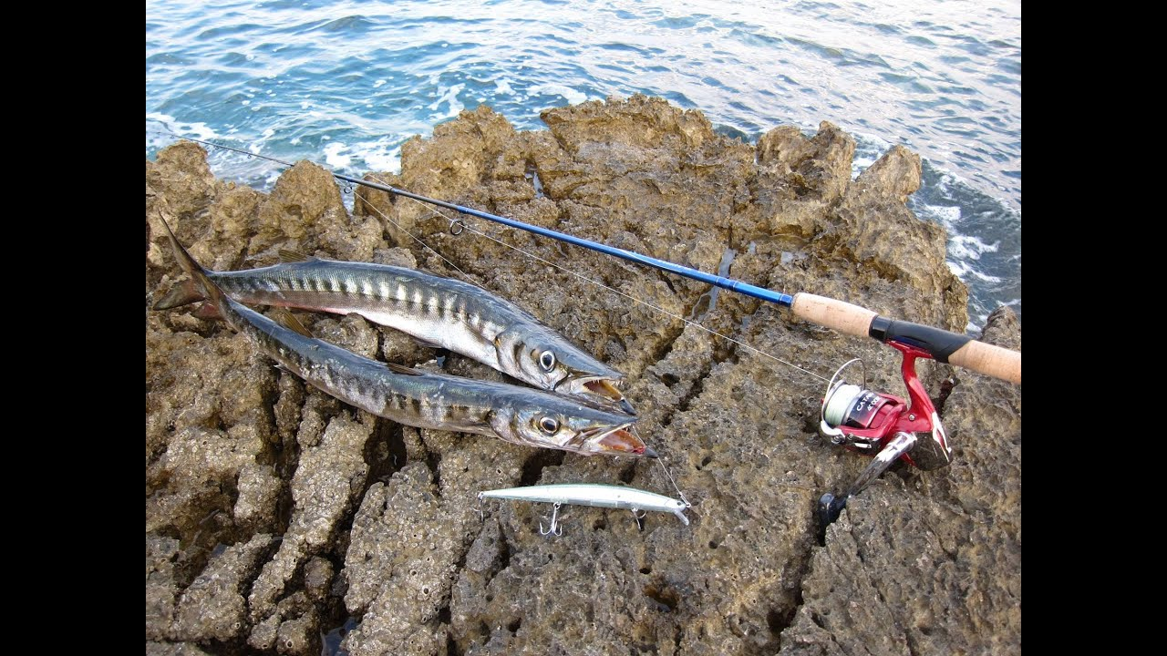 Fishing With Duo Tide Minnow Slim 175 Barracuda