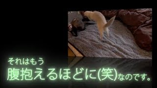 Enjoy movies of ferrets taken with slow motion! * All subtitles in ...