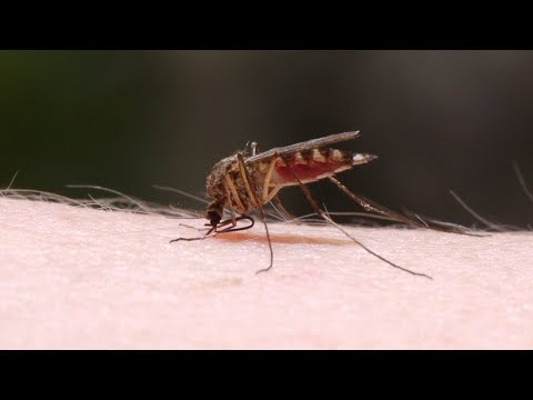 Mayo Clinic Minute: Easing the itch of mosquito bites