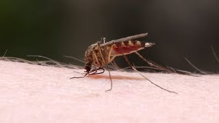 Mayo Clinic Minute: Easing the itch of mosquito bites thumbnail