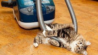 Прикол, Улетное Видео с Кошками