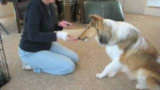 How To Teach A Dog The 'high Five' Trick