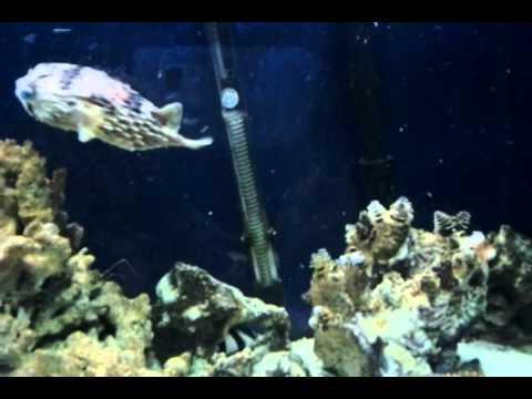 Mi acuario marino de 250 litros youtube for Acuario marino precio