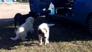 Минск 9 09 2013 щенки двортерьера в дар Александр Помогите найти хозяина