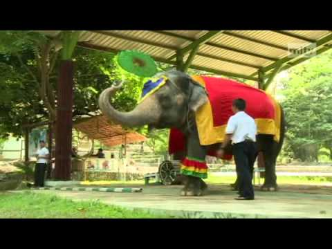 mitv -  Yangon Zoo: Performing Elephants
