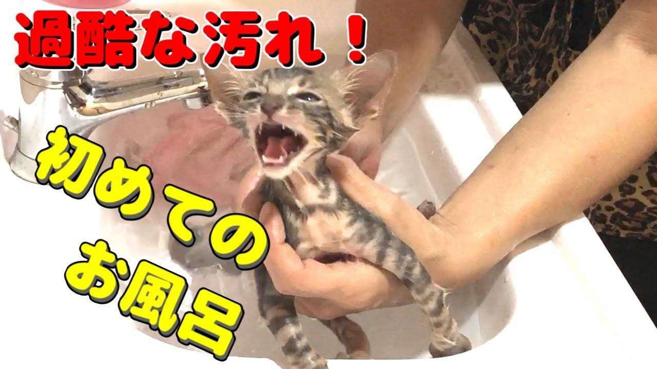子猫のはじめてのお風呂がかわいい♪ヤマネコの血を引く子猫のやまと-Blood of a wildcat.Yamato the cat.-#3