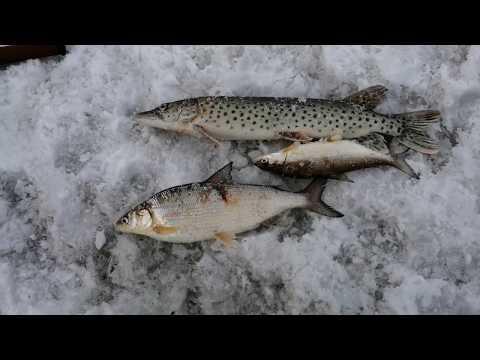 Рыбалка на Амуре 2 апреля