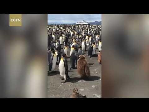 Вопрос: Кто летает быстрее пингвин или птица киви?
