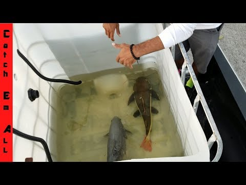 BIGGEST EXOTIC FISH TRANSPORT Across State! NEW MONSTERS!
