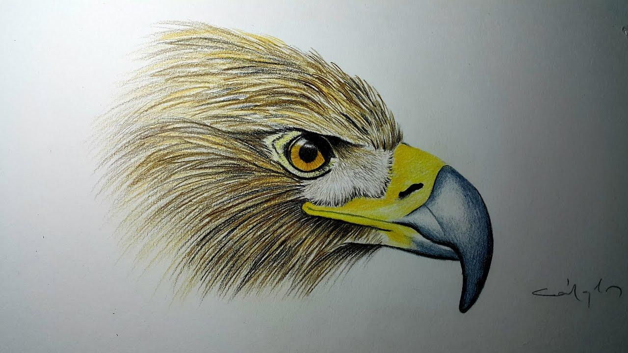 Kartal Cizimi Drawing Eagle Youtube