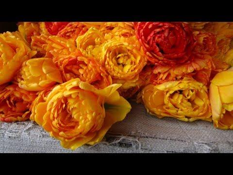 Тюльпан «Сан Лавер»