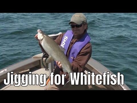 Vertical Jigging For Huge Whitefish | Fish'n Canada
