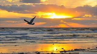 Chris Rea Only to fly