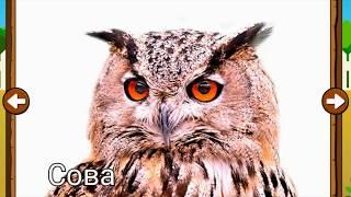 Птицы и их голоса. Животные для детей. Учим птиц. Птицы в лесу
