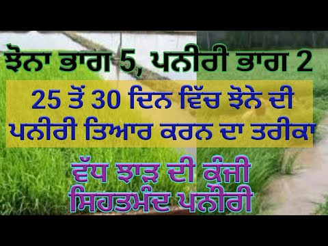 Paddy Nursery Part 2, paddy part 5, with Sher Gill Markhai