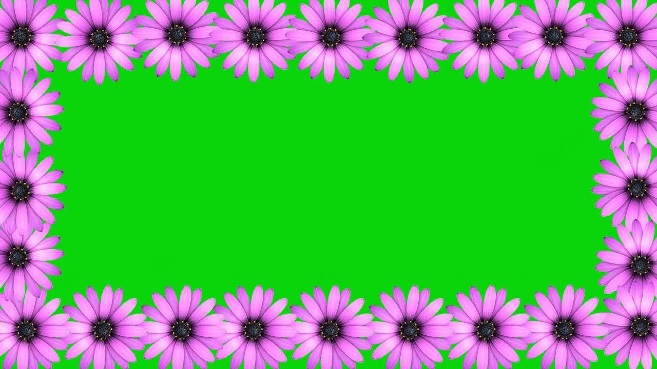 wedding background video effects hdanimation pink flower