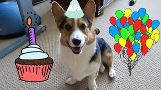 Giving My Corgi His Best Day Ever - Life After College: Ep. 393