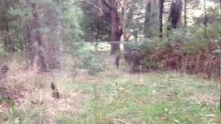 David M. Green sees kangaroo while listening to Gary Numan