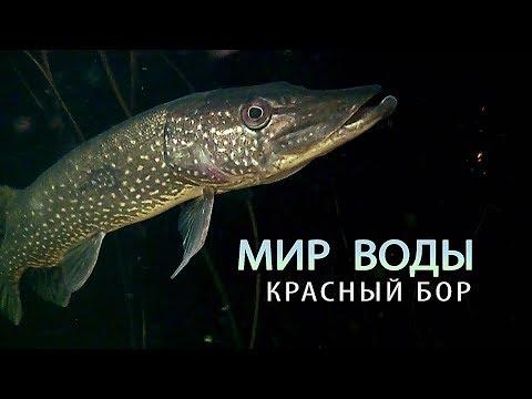 Красный Бор. Мир воды. Фильм - Видео онлайн