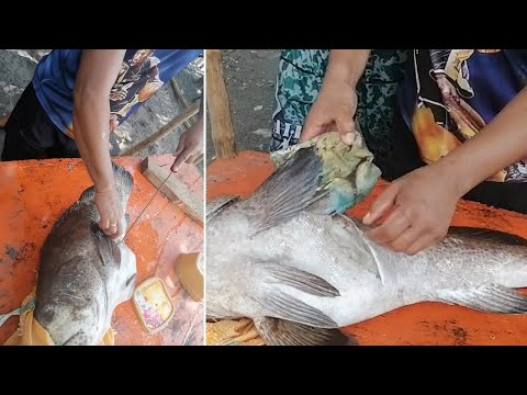 Plastic Pollution Found In Fish's Stomach