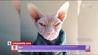 Найпопулярніші коти інтернету