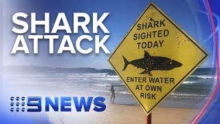 Man in hospital after suspected shark attack near Sydney's Manly beach | Nine News Australia