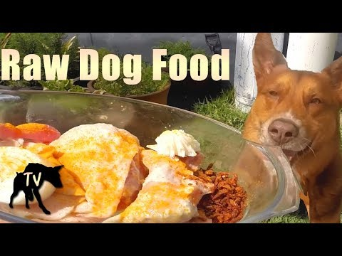 Raw Dog Food for Australian Kelpie Mix | Raw Feeding Vlog