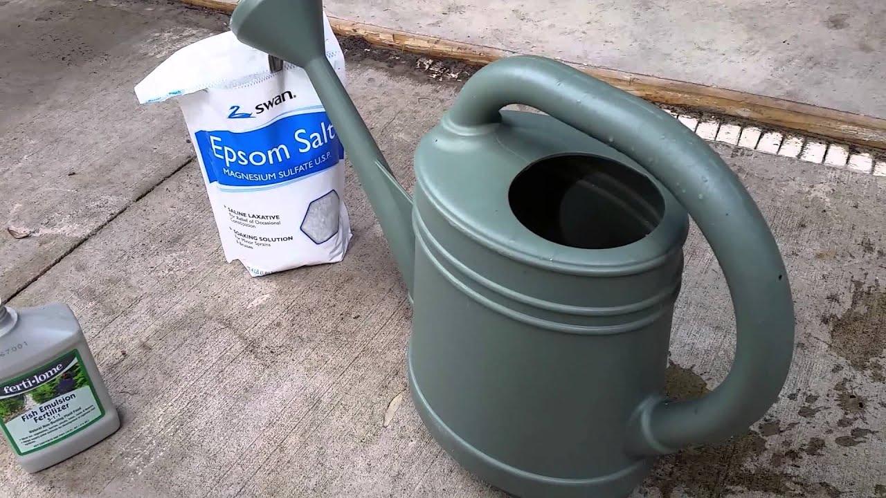 Fish fertilizer and epsom salt for the garden youtube for Epsom salt for fish