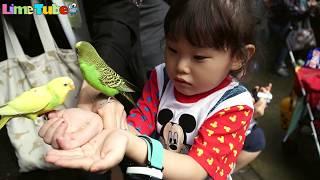 도전! 앵무새에게 먹이주기 어린이 애완동물 체험 | 에버랜드 | LimeTube & Toy 라임튜브