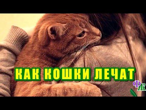 Вопрос: Как определить признаки жестокого обращения с кошкой?