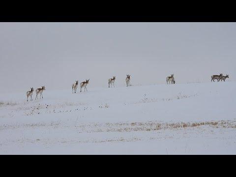 Day 11 Of The Wyoming/Nebraska Global Warming Crisis