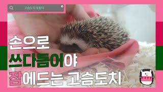 [홍또둥] 손으로 쓰다듬어야 잠에드는 고슴도치
