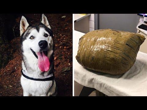 Женщина уезжая в отпуск оставила собаку в питомнике, когда она вернулась то не поверила своим глазам