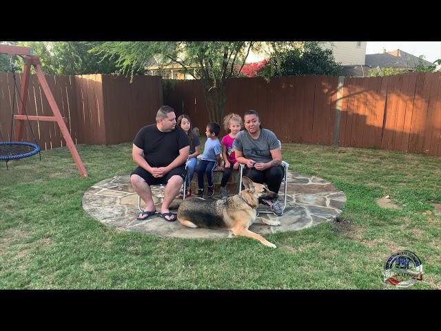 Gunner's Owners Testimonial   German Shepherd   GSD