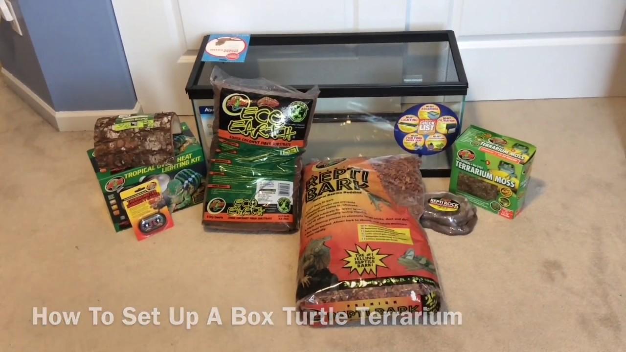 - How To Set Up A Box Turtle Terrarium - YouTube