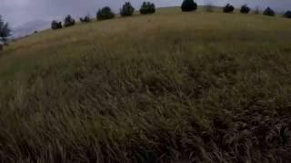 Eurasian Dove Hunting: Long shots