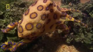 Самые Опасные Животные  Австралии !!! Животные с National Geographic / Видео